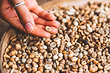 Факт дня: орехи могут продлить нам жизнь