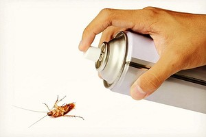 Народное средство от тараканов: выбираем самое эффективное