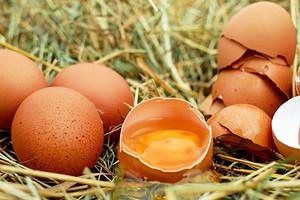 Стабильный вес и активная работа мозга: зачем есть сырые яйца (польза и вред)
