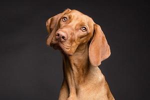 7 причин, почему ты на самом деле хочешь завести домашнее животное