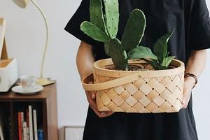Вот почему ты не замужем: 7 растений, которые не дают тебе устроить личную жизнь