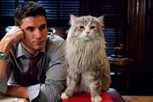 Кот в доме хозяин: 9 забавных историй от владельцев пушистых любимцев