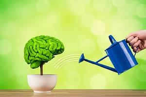 Развитие правого полушария мозга: 6 упражнений (особенно полезно для правшей)