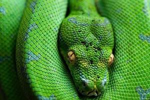К чему снится змея: толкование по Фрейду, Ванге и другим сонникам