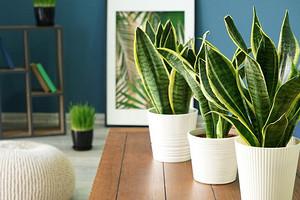 Микроклимат и хорошая аура: 10 лучших растений для каждой комнаты