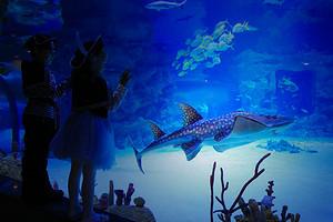 Где посмотреть на подводный мир и коралловые рифы: в «Москвариуме» пройдет весенний фестиваль