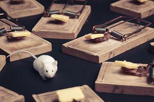 Как избавиться от мышей в квартире навсегда: 9 эффективных средств