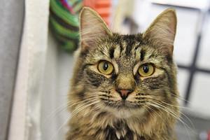 Кошка Моника с иммунодефицитом оказалась в центре внимания после своего дня рождения