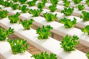 9 видов листовой зелени, которые помогают похудеть и снижают риск рака