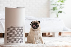 Для чего нужен ионизатор воздуха для квартиры и так ли он полезен