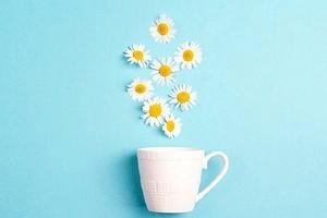 Не только от простуды: еще 9 полезных свойств чая из ромашки