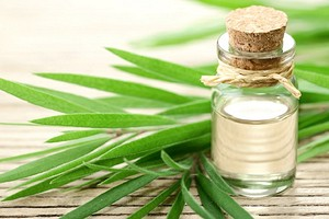 Масло чайного дерева для зубов: секреты безвредного, но эффективного отбеливания