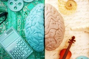 Развитие левого полушария мозга: зачем это нужно и что делать для результата
