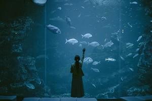 К чему снится рыба: толкование по сонникам Миллера, Ванги, Нострадамуса и другим