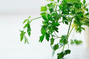 Выращивание петрушки на подоконнике из семян: самый простой способ