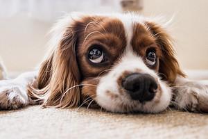 Гав-гороскоп: как выбрать собаку по знаку Зодиака