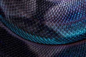 А что внутри: змеиный яд в косметике (и почему он нужен нам всем)