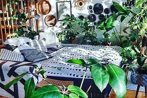 Как на курорте: 5 растений, которые создадут дома атмосферу отпуска