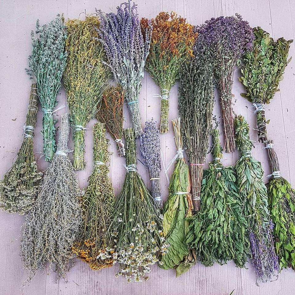 Собери свой букет трав: 9 полезных лекарственных растений средней полосы России