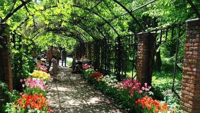 Ботанический сад МГУ к Фестивалю цветов создает Садовый патруль