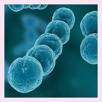 Вагинальная стрептококовая инфекция во время беременности