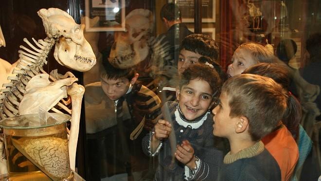 Дарвиновский музей отмечает свое второе рождение