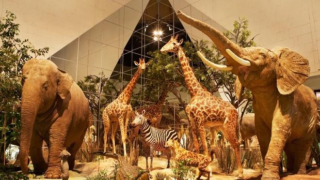 Что приготовил для детей Дарвиновский музей?