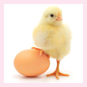 Прикормы: когда пора давать яйцо детям?