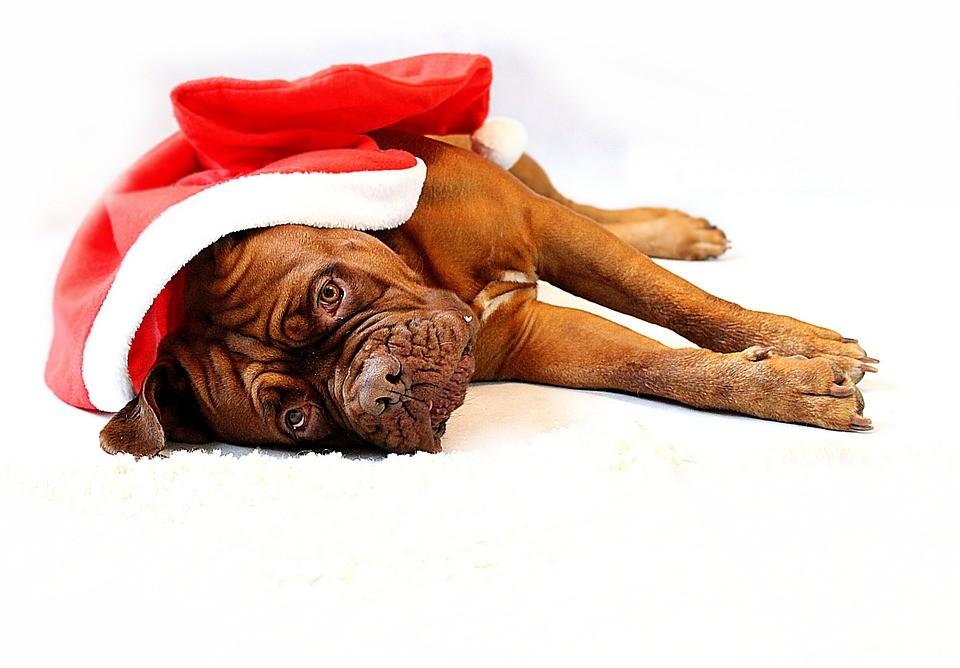 Домашние животные и Новый год: праздник без стресса