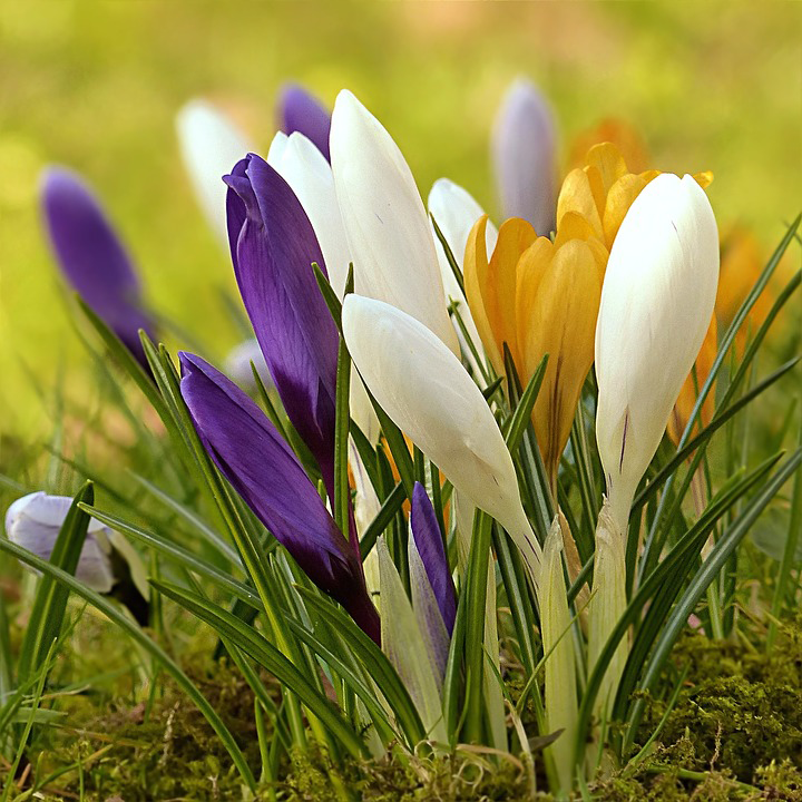 Сажай первоцветы осенью: основные правила посадки