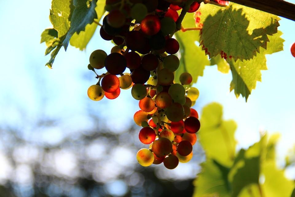 7 советов от сомелье: как выбрать вино и с чем его подать