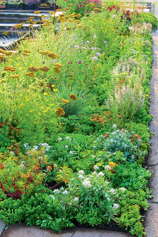 Ноу-хау для декоративного сада: цветочный конструктор