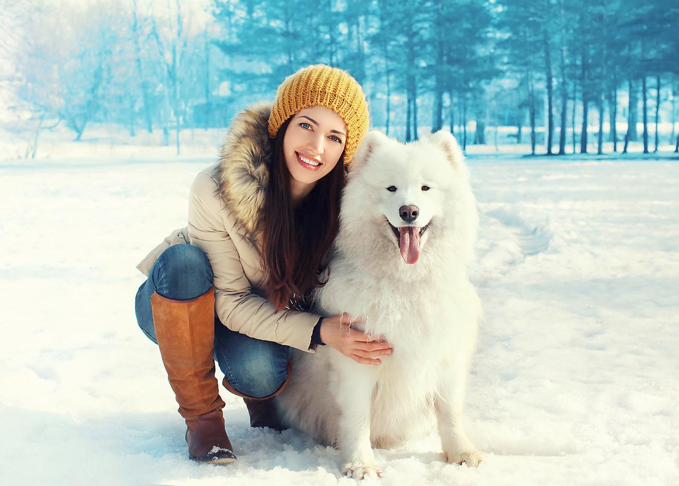 Собаки зимой: 3 главных опасности и как их обойти