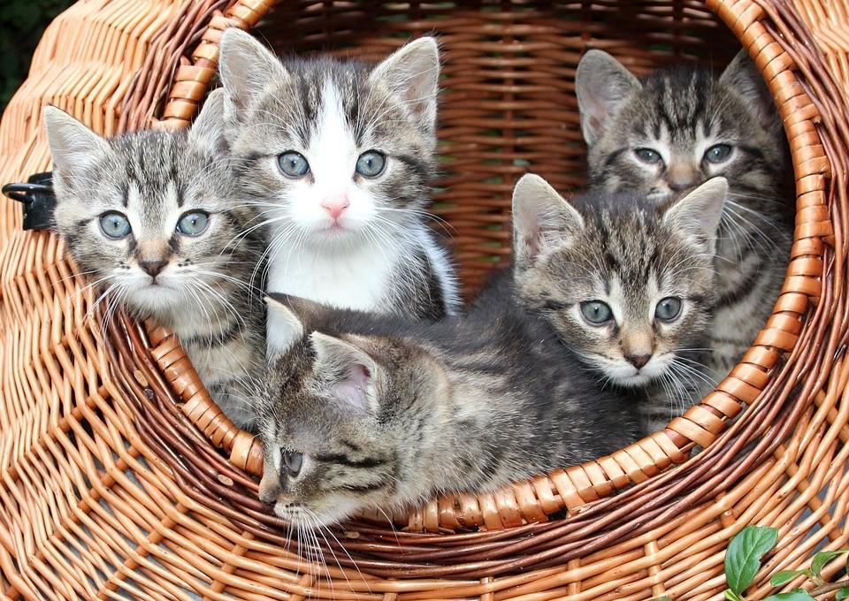 Кошки: секреты самого таинственного животного