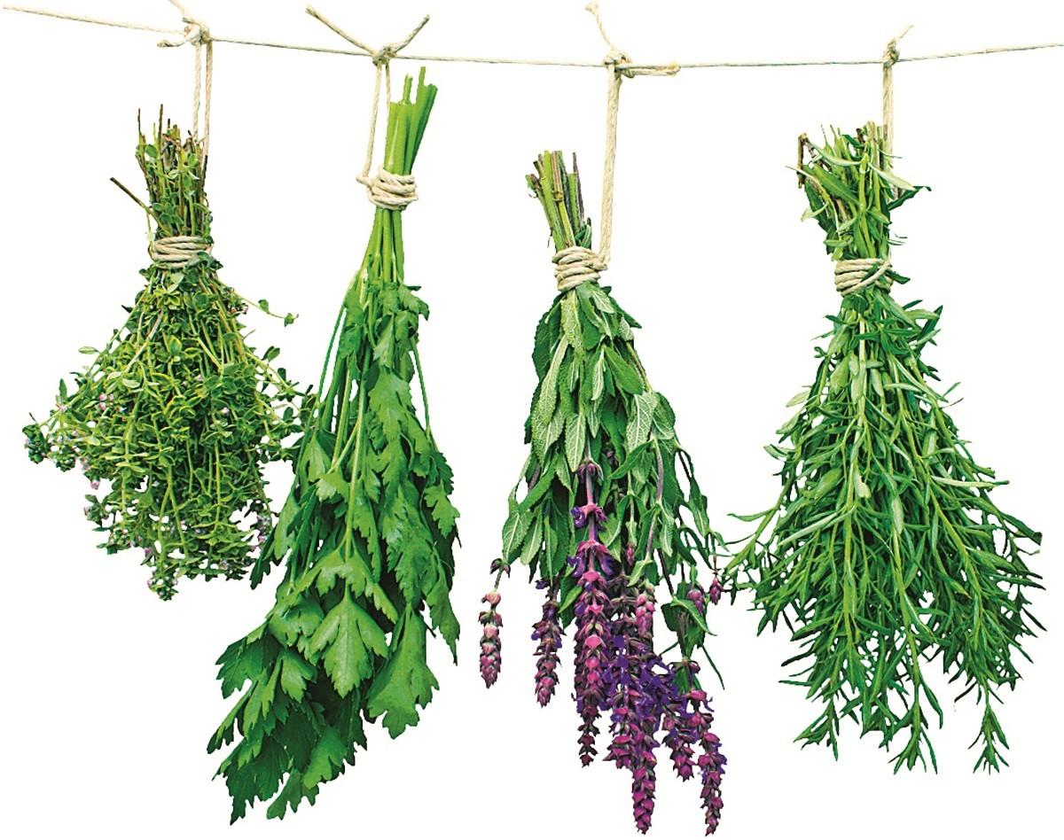 Целебные растения: чем лечились наши предки
