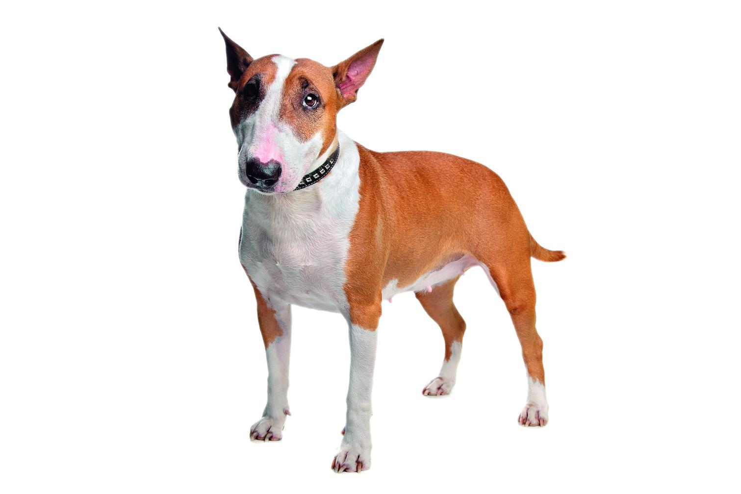Отношениям мешает собака: есть ли выход?