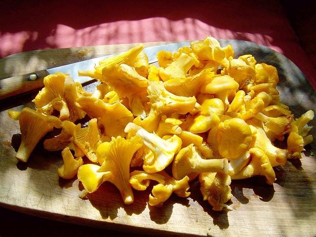 Топ-10: блюда из грибов, которые срочно нужно готовить