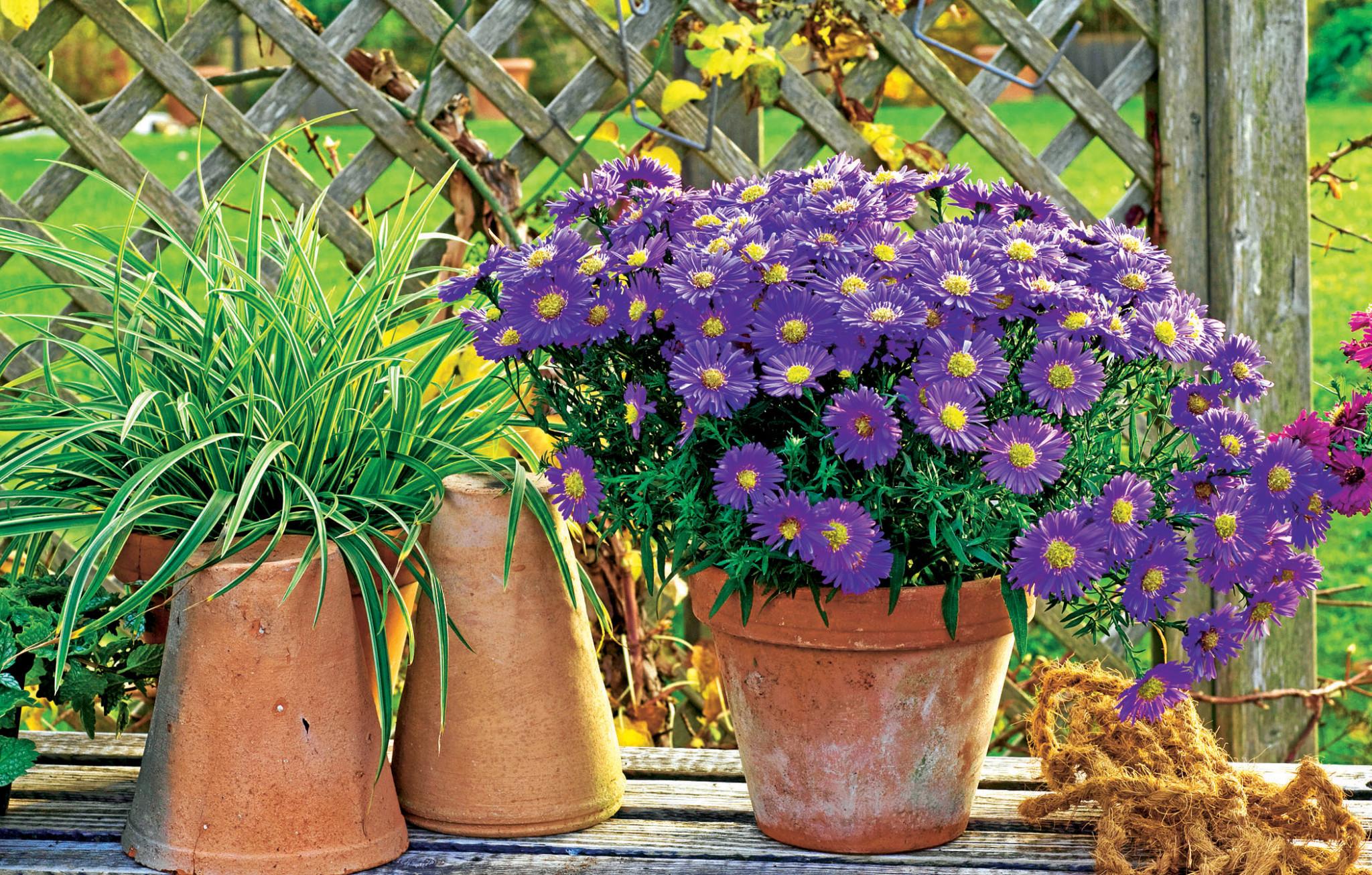 Топ-5 красивых осенних цветов: посадка и уход