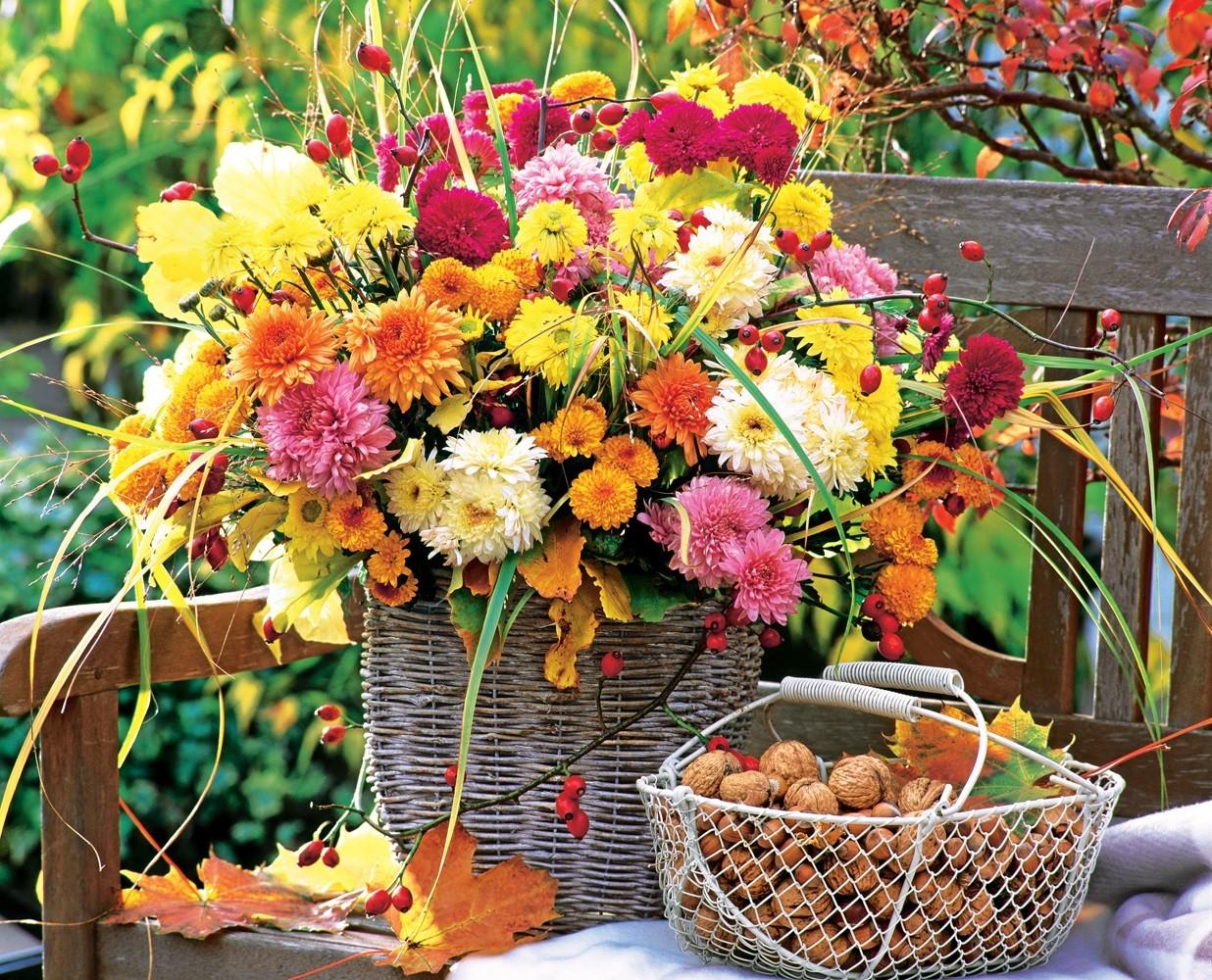 Хризантемы в саду: советы по обустройству осеннего цветника