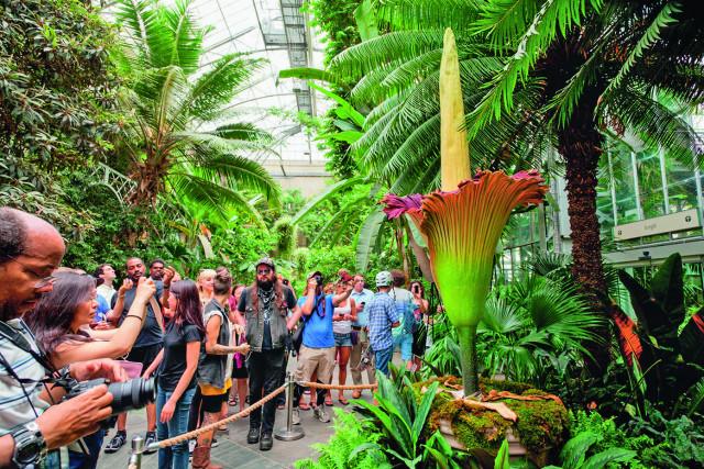 Самые известные растения в мире: топ-7 зеленых героев