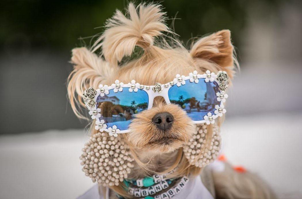 6 животных, которые одеваются моднее людей