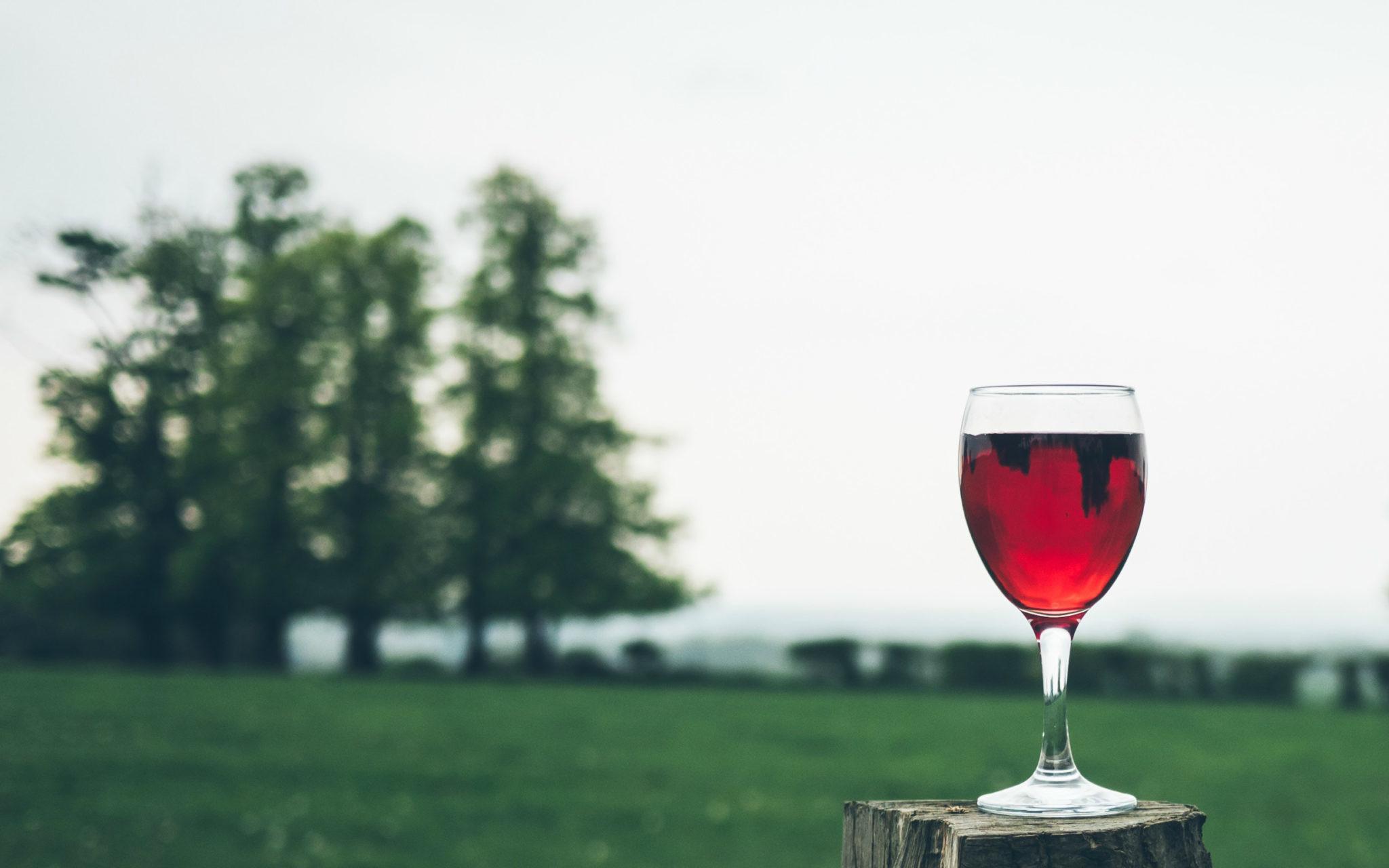 Факт дня: красное вино продлевает жизнь