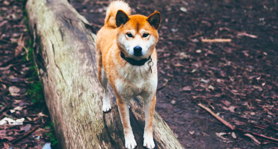 5 мифов о вакцинации собак