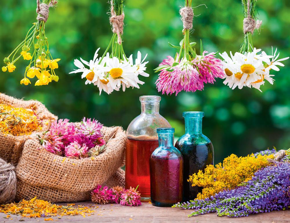 6 целебных трав, которые должны быть в твоей аптечке
