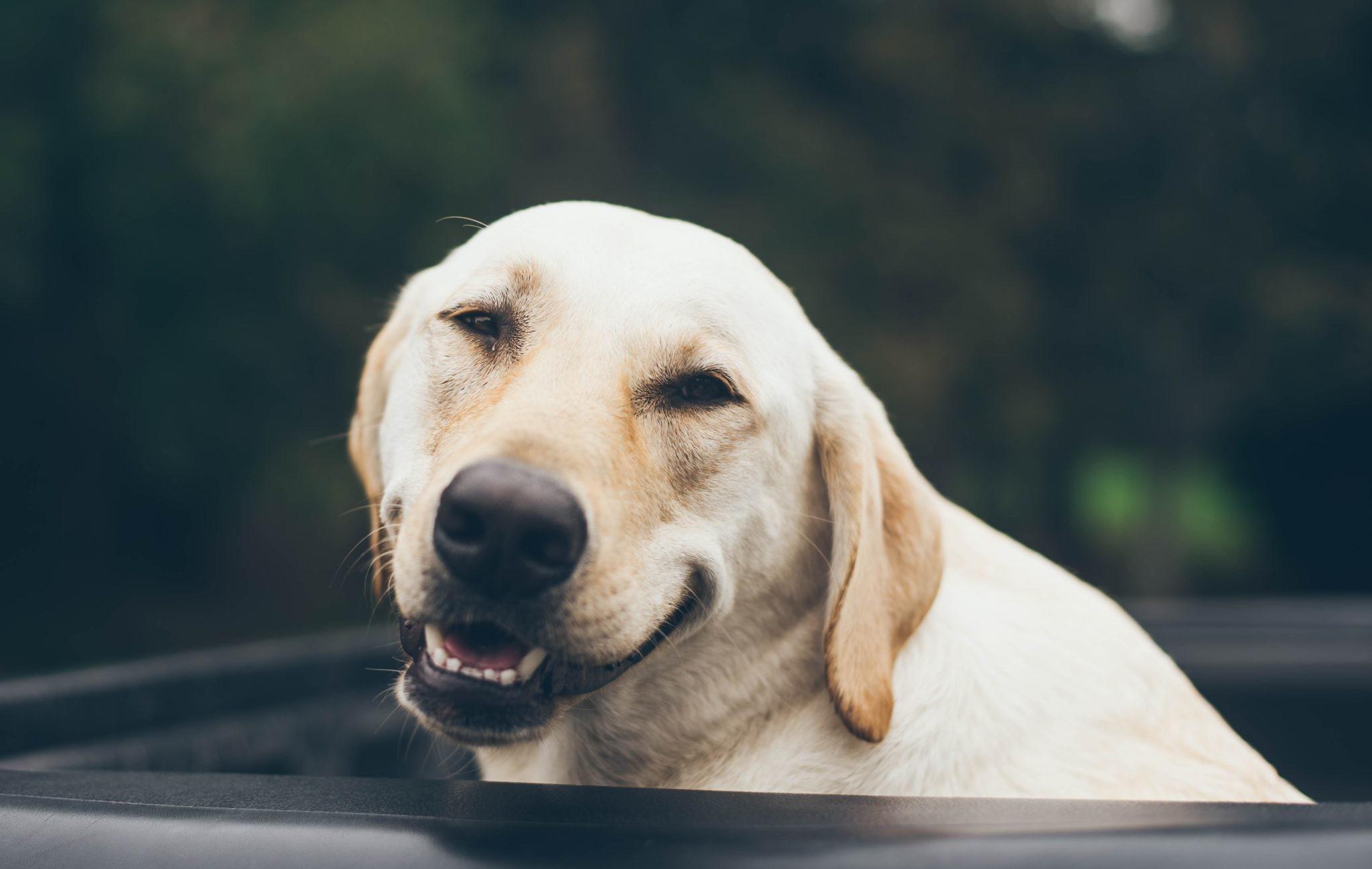 Стоит ли заводить собаку? 7 причин «ЗА»