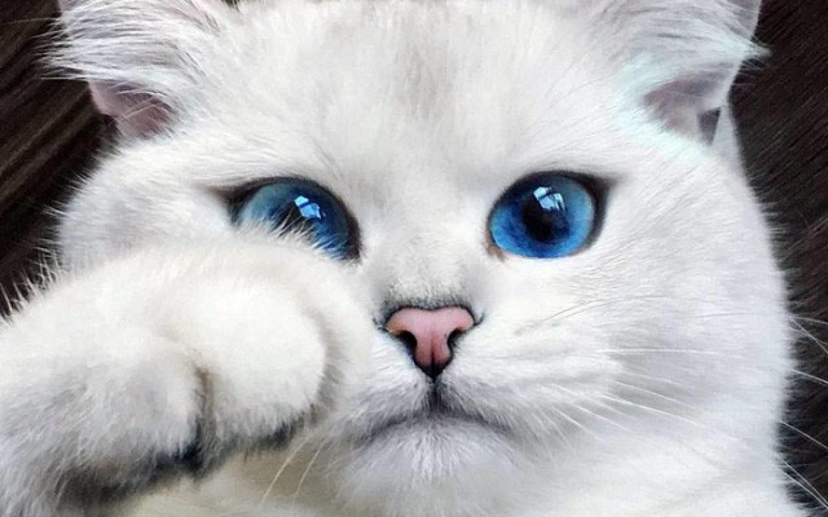 Сами с усами: знаменитые коты-миллионеры из Instagram