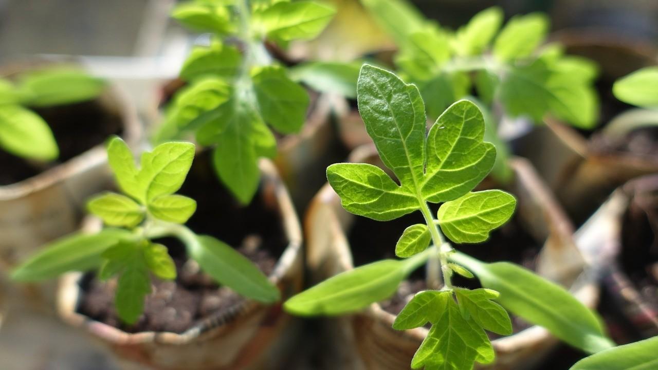 Быстрая рассада для огорода: полезные советы и календарь посадок