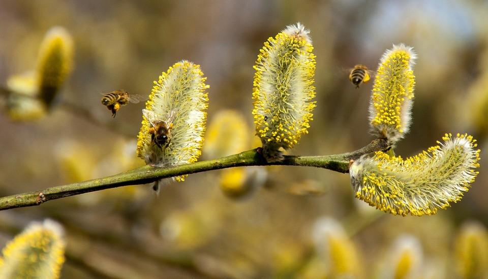 Аллергия на пыльцу или простуда? 5 главных отличий