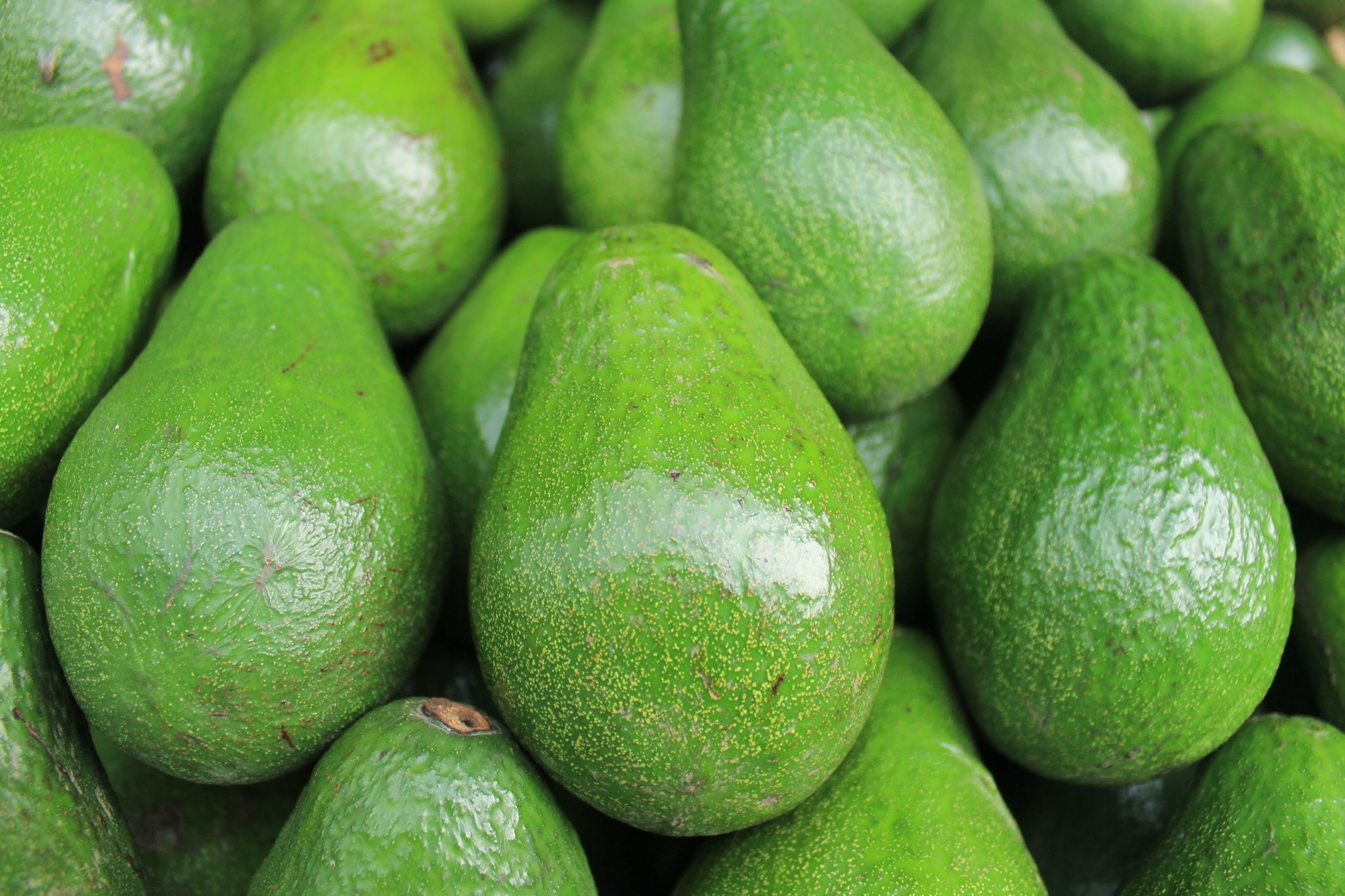 Авокадо: польза и вред