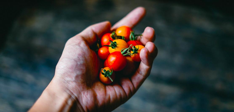 Команда красных: все о пользе томатов